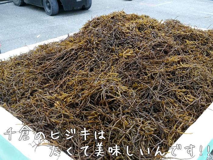 南房総 漁協 千倉 ひじき 水産物