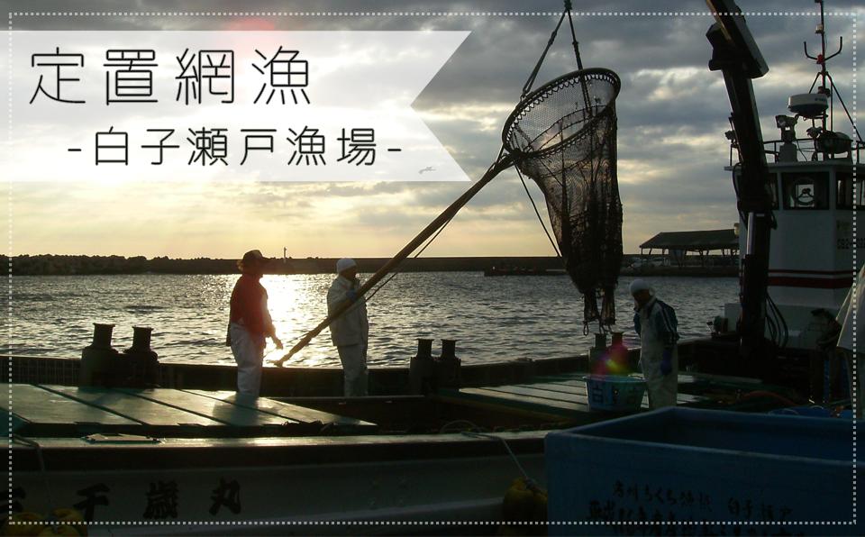 南房総 漁協 千倉 定置網 魚