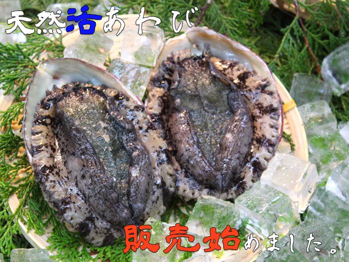 東安房漁協 Yahoo!通販店 あわび