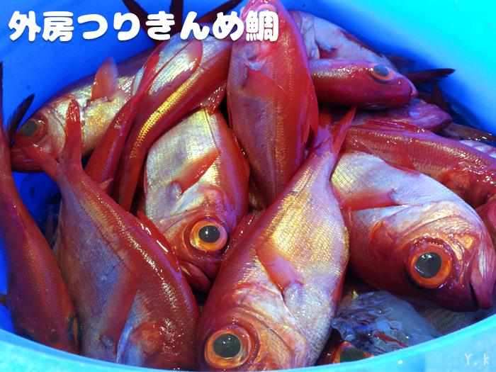 東安房漁協 金目鯛 天津小湊 つりきんめ