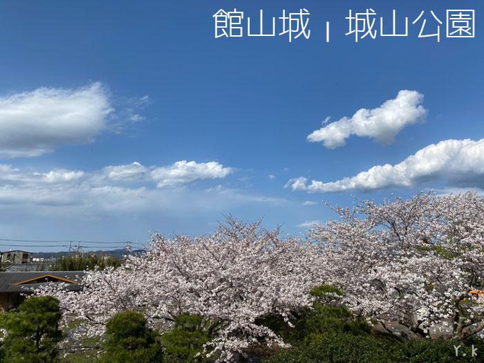 館山城桜満開